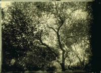 http://schroederworks.com/files/gimgs/th-45_Trees.jpg