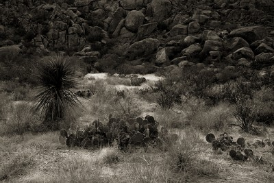 http://schroederworks.com/files/gimgs/th-59_BigBend_Jan2009_116.jpg