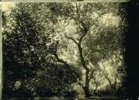 https://schroederworks.com/files/gimgs/th-45_Trees.jpg